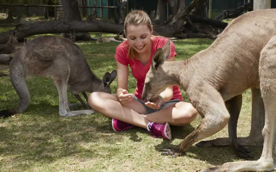Feeding Kangaroos, Brisbane, QLD
